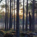 Kansikuva: Salamajärven kansallispuisto