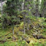 Kansikuva: Isojärven kansallispuisto
