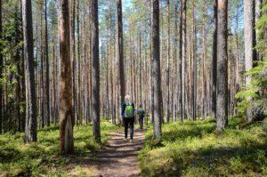 Retkeilijöitä Pyhä-Häkin kansallispuistossa, Saarijärvi