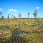 Kansikuva: Pyhä-Häkin kansallispuisto